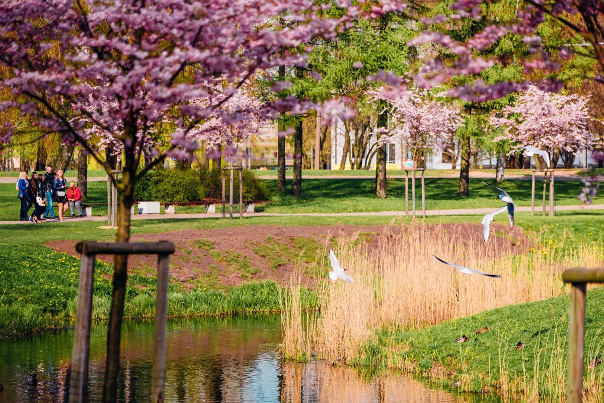 Минутка селфи: самые живописные парки Риги