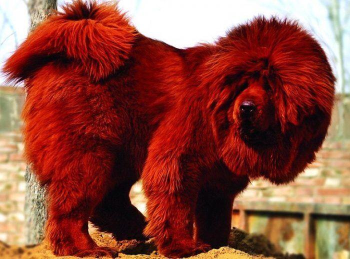 самые дорогие животные в мире фото отличие уже определено