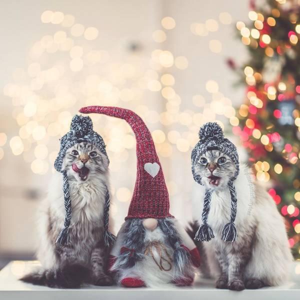 Котики против елок, чернокожий Дед Мороз и другие фото в новогоднем настроении