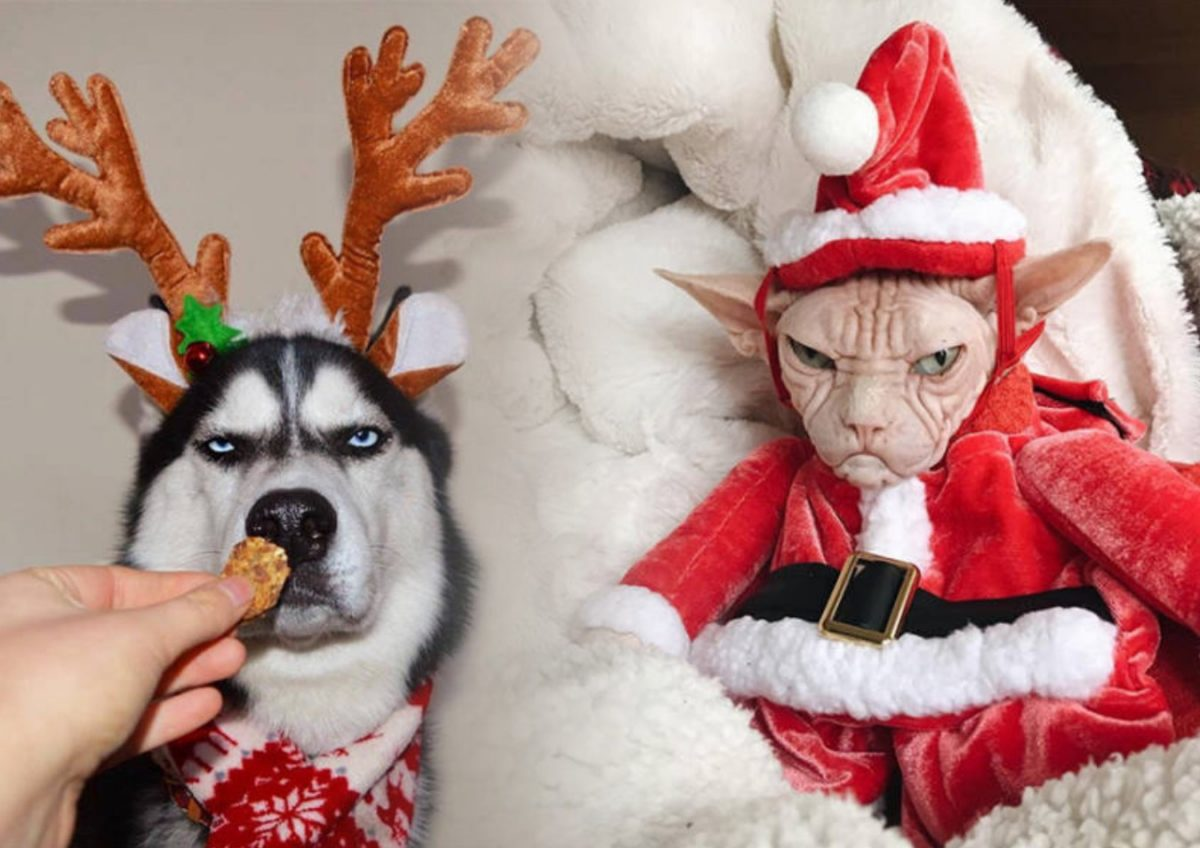 Хозяин, ты совсем сбрендил?! Животные, которые не очень рады Рождеству!