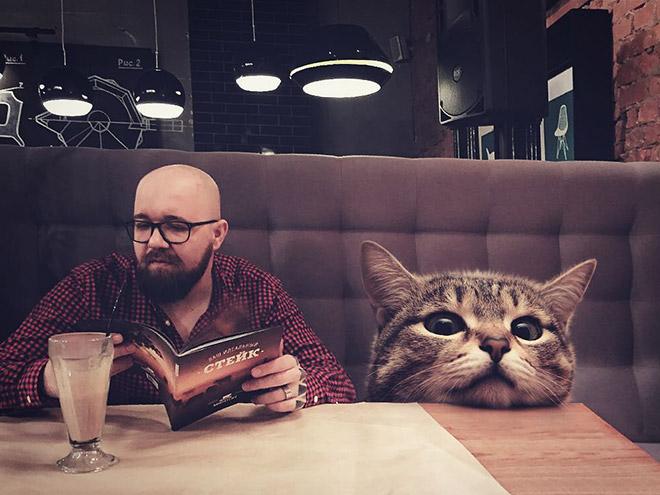Фотограф показал,как выглядел бы мир, в котором гигантские кошки живут среди людей.