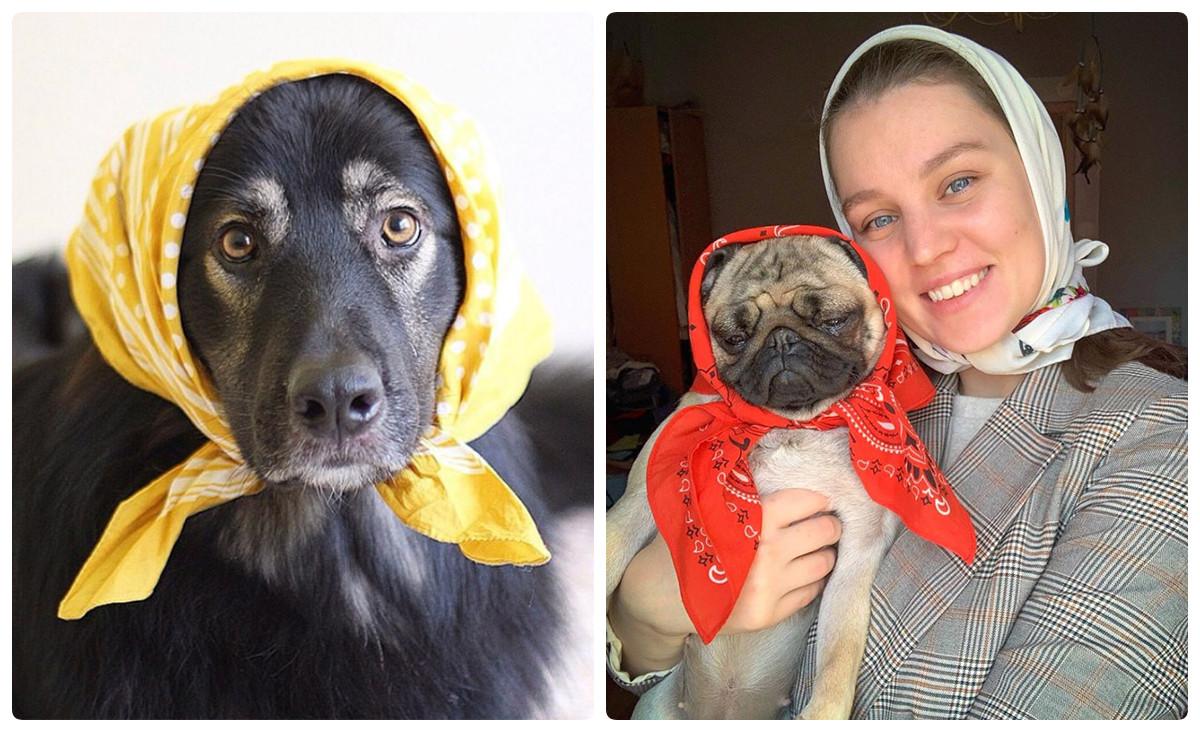 Хозяева собак пытаются превратить питомцев в русских бабушек