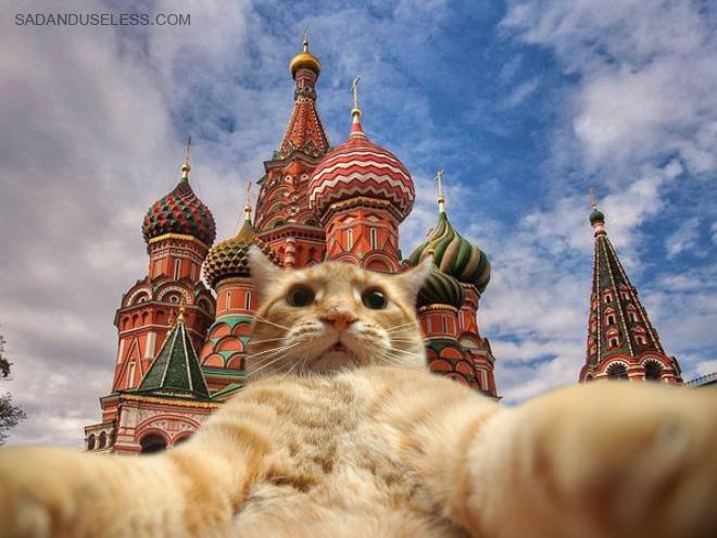 Путешествующие котики делают селфи на фоне достопримечательностей