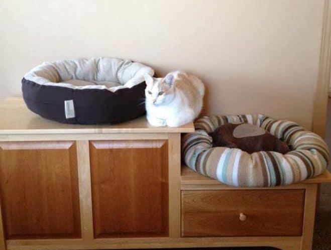 Плевать кошки хотели на ваши подарки (21 фото)