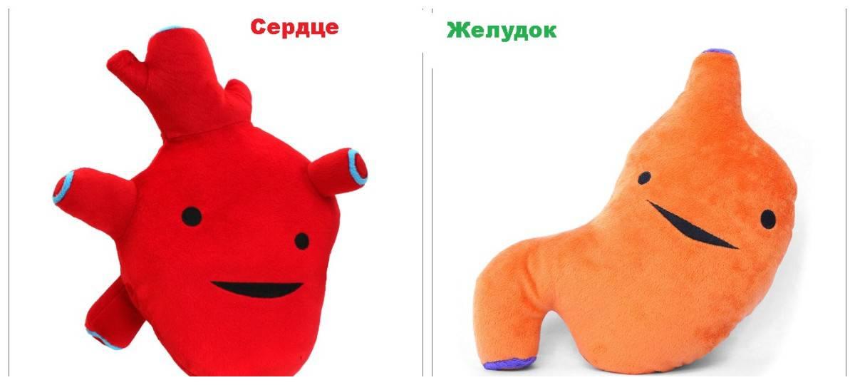 Сердце, печень, глаз, простата — налетай играть, ребята! Игрушки в виде внутренних органов стали хитом продаж!