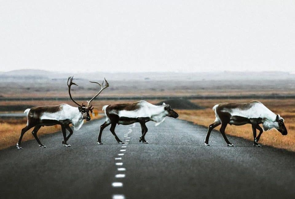 Путешествие по Исландии, не выходя из дома (25 фото)