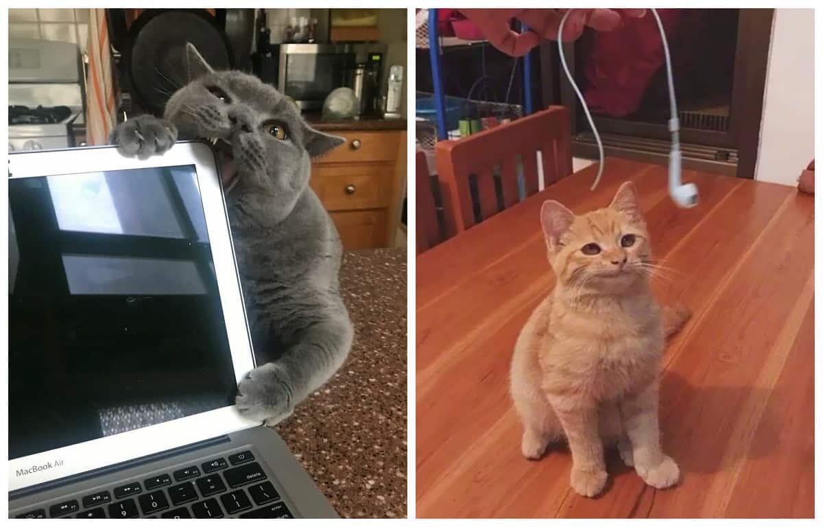 20 фото, доказывающих, что коты те еще негодники!