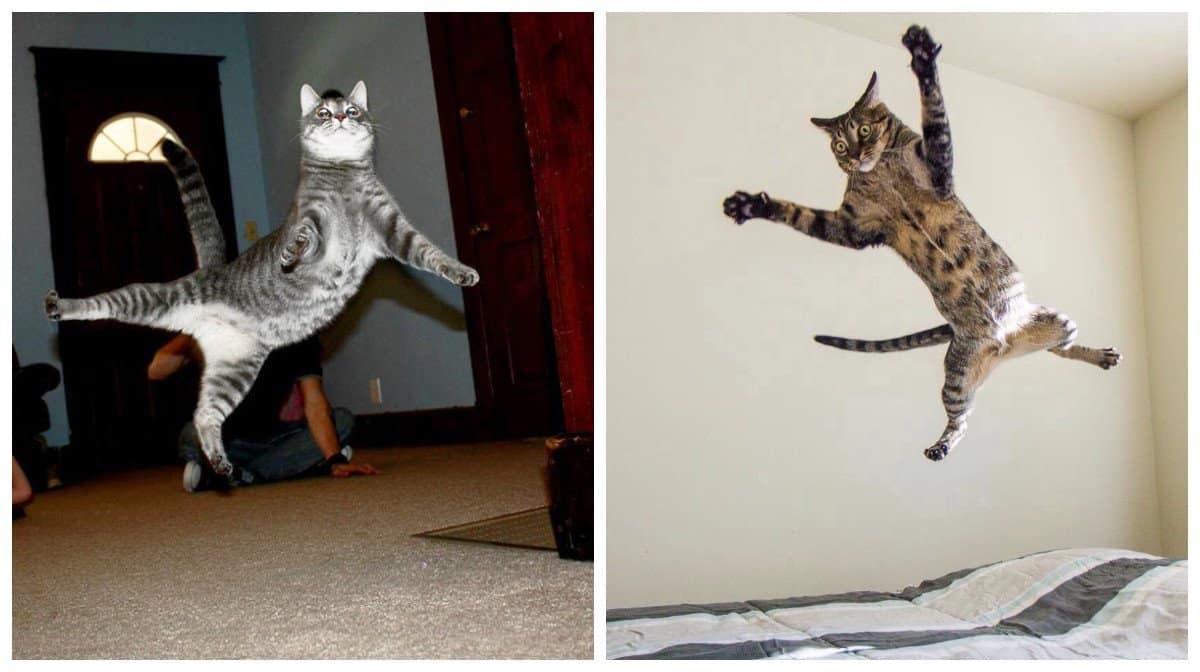 20 доказательств того, что коты – это левитирующие инопланетяне