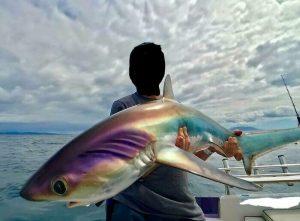 человек держит в руках разноцветную акулу