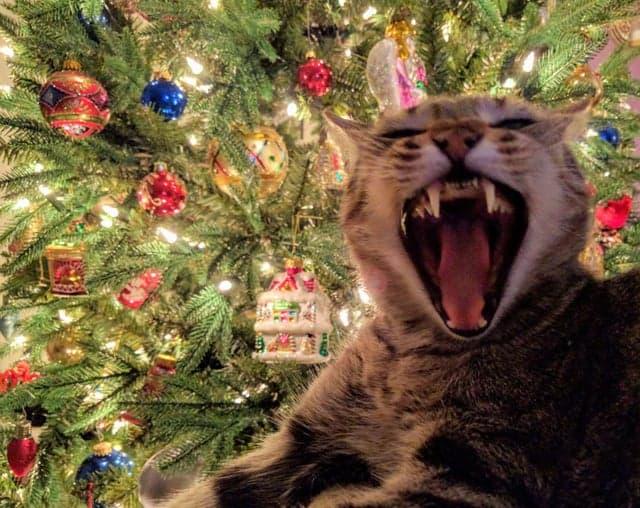 15 котов, которых любят в любом видн и настроении, даже в таком…