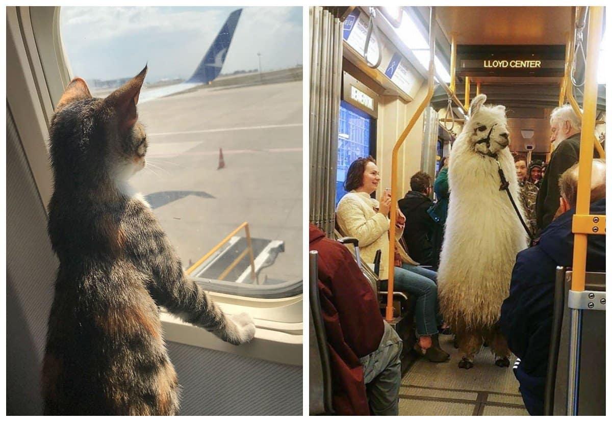 20 путешествующих животных, которые ведут себя даже более воспитанно, чем люди