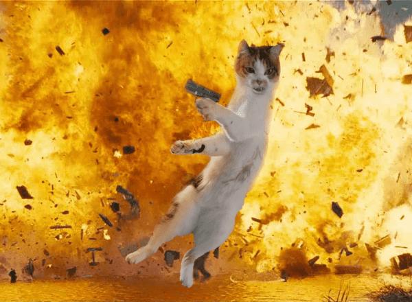 Кот-прыгун стал новым героем фотошоп-битвы в Сети (13 фото)