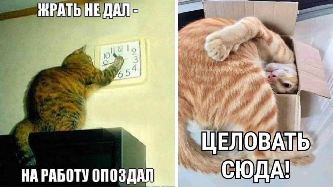 Когда на душе уже март - картинки с котами и надписями