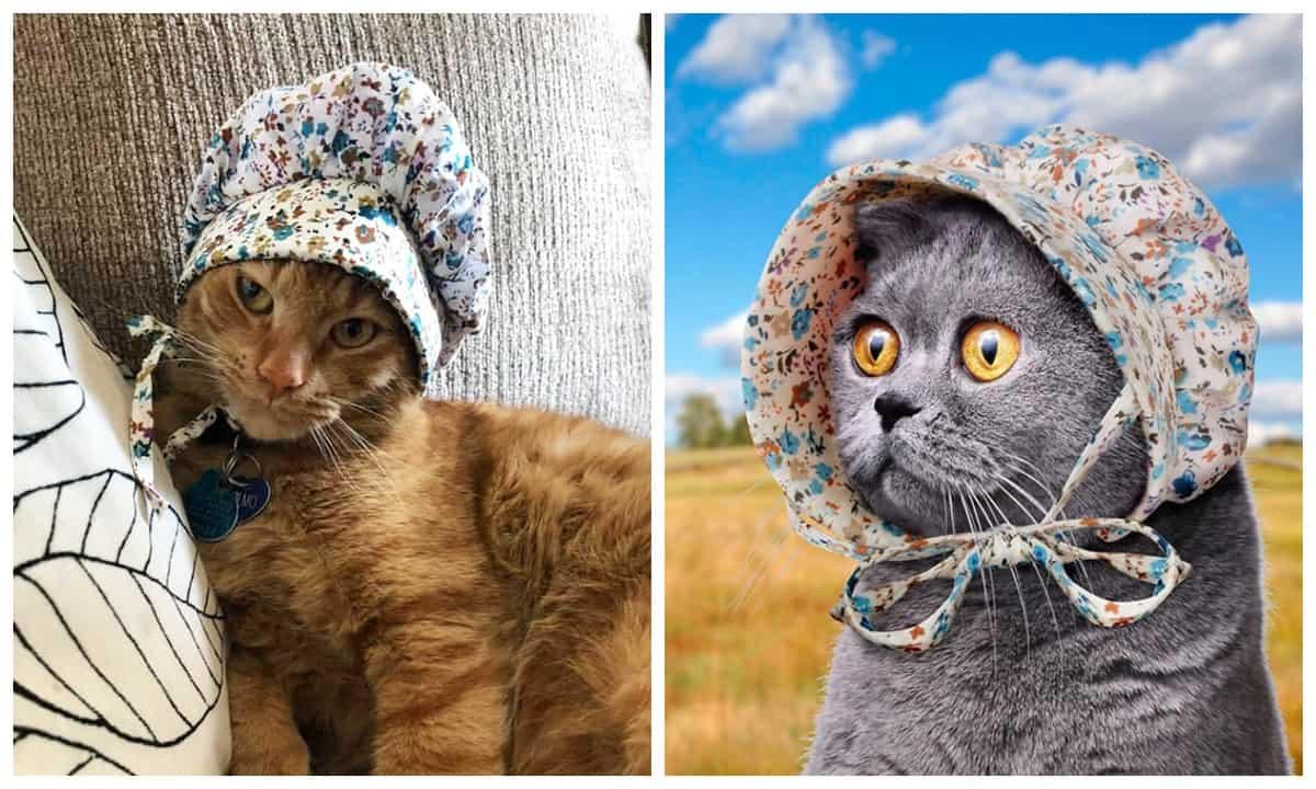 Шляпки для котиков -  последний модный тренд в мире домашних животных