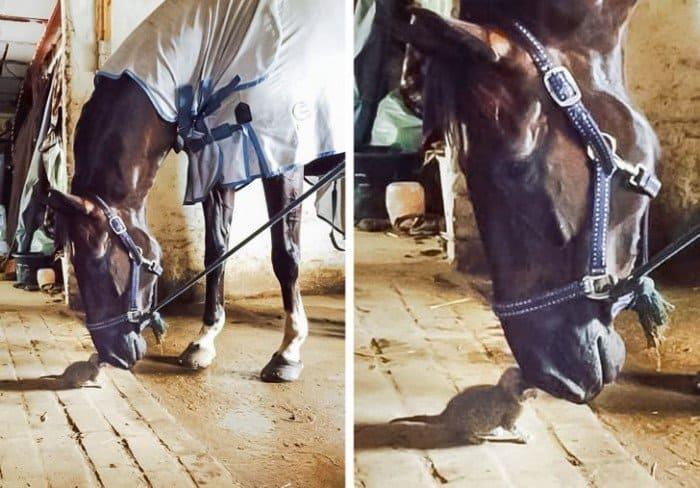 Примеры неожиданной любви и дружбы животных (20 фото)