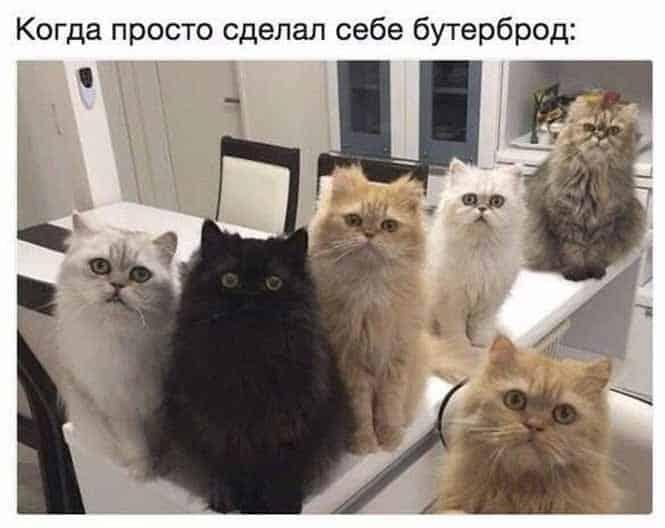 Сборище смешных картинок и российская пенза для ног