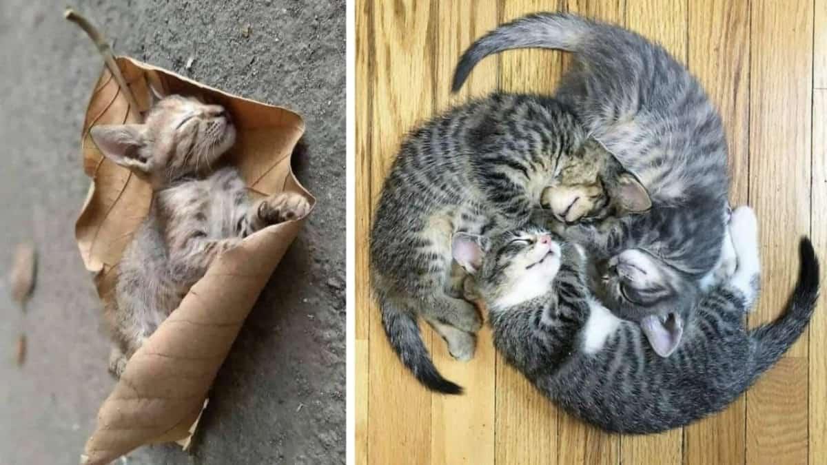 25 малышей-котят, которые настолько малы, что это заставляет наше сердце сжаться от умиления