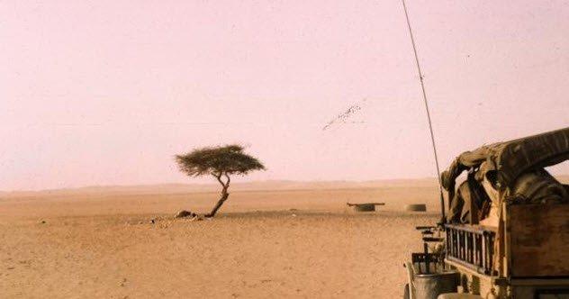 10 удивительных фактов, доказывающих, что пустыня - куда более странное место, чем вы могли подумать!