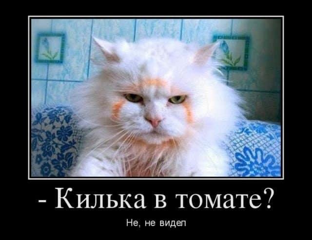 21 демотиватор с котиками на вечер