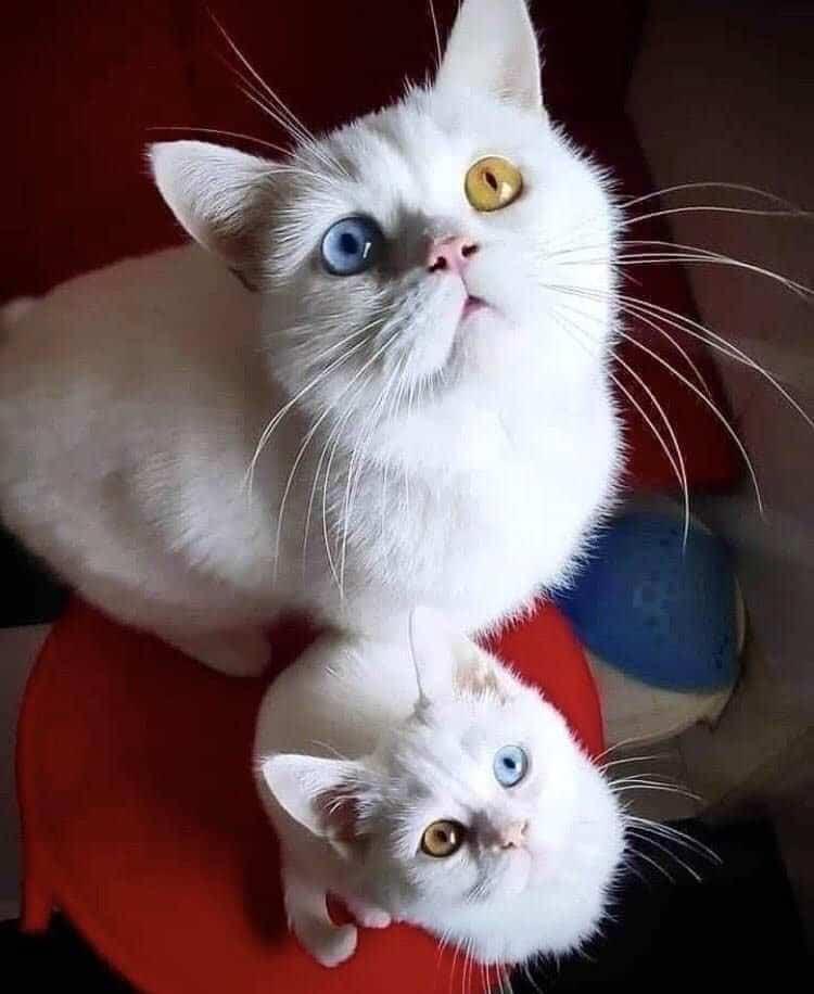 Бесподобная кошачья семейка и еще 19 фотографий, которые вы должны увидеть