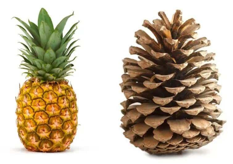 Бананы слегка радиоактивны и ещё 15 фактов о фруктах, заставляющих взглянуть на них по-другому