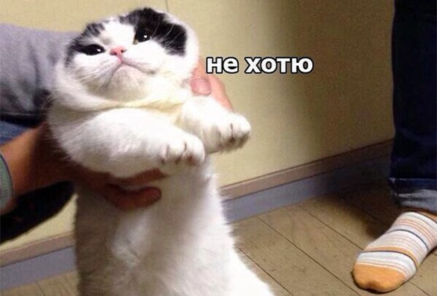 Смешные мемы с котами, которые поднимут вам настроение