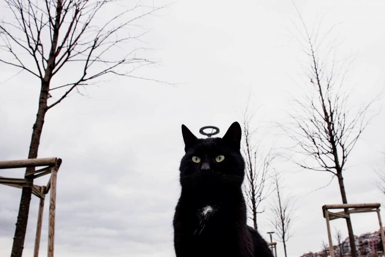 Святой кот и еще 30 потрясающих фотографий, снятых с удачного ракурса