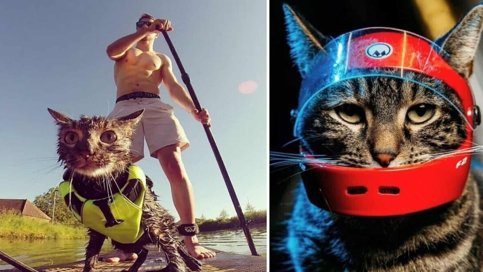 Когда у кошки из Instagram жизнь в сто раз интереснее чем у вас
