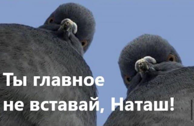 Ну допустим, курлы! Мемы и шуточки с вечно недовольными голубями