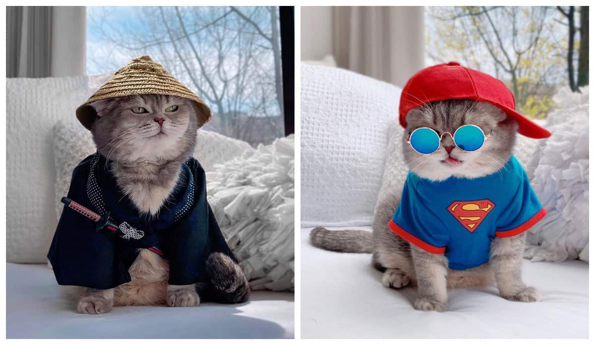 Брошенный кот нашел новый дом и стал сенсацией Instagram благодаря своим милым нарядам
