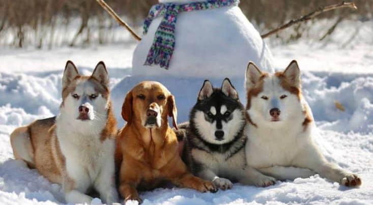 Этот центр по уходу за собаками справляется с невозможным, делая идеальные групповые фотографии собак