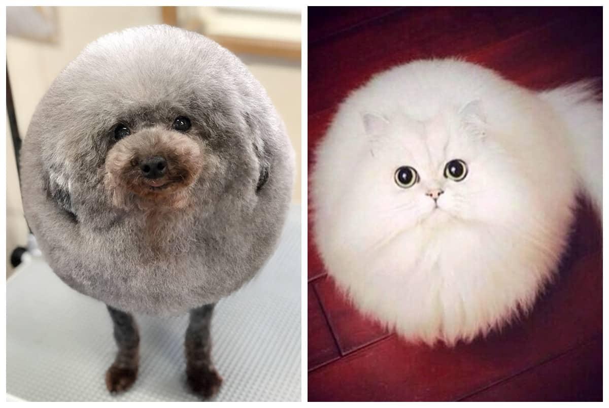 Вот кого могли назвать Шариком: этот аккаунт в Instagram публикует самых круглых животных в мире (не фотошоп!)