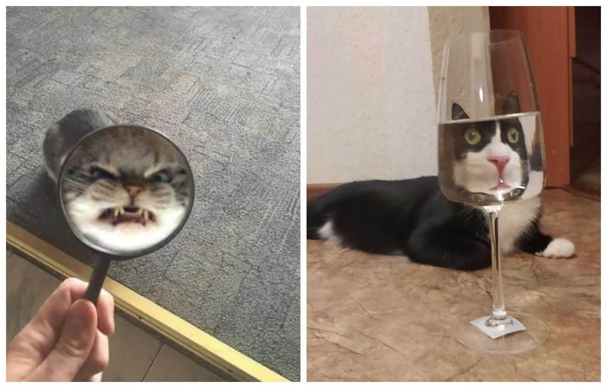 Забавные искаженные стеклом фотографии домашних животных