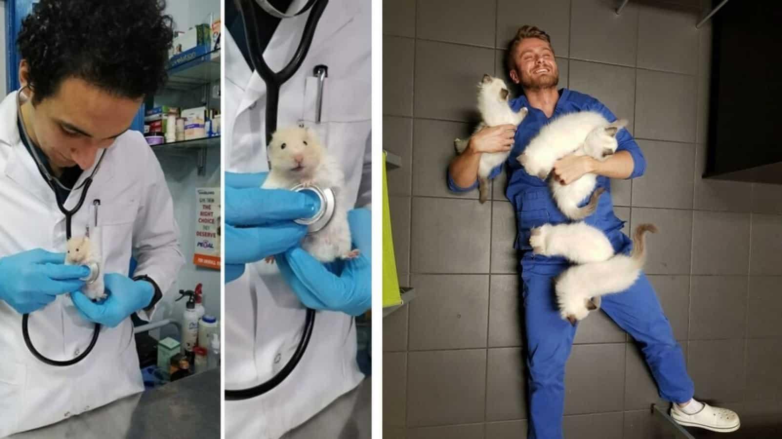 20 пушистых причин, почему работа ветеринара лучшая из профессий