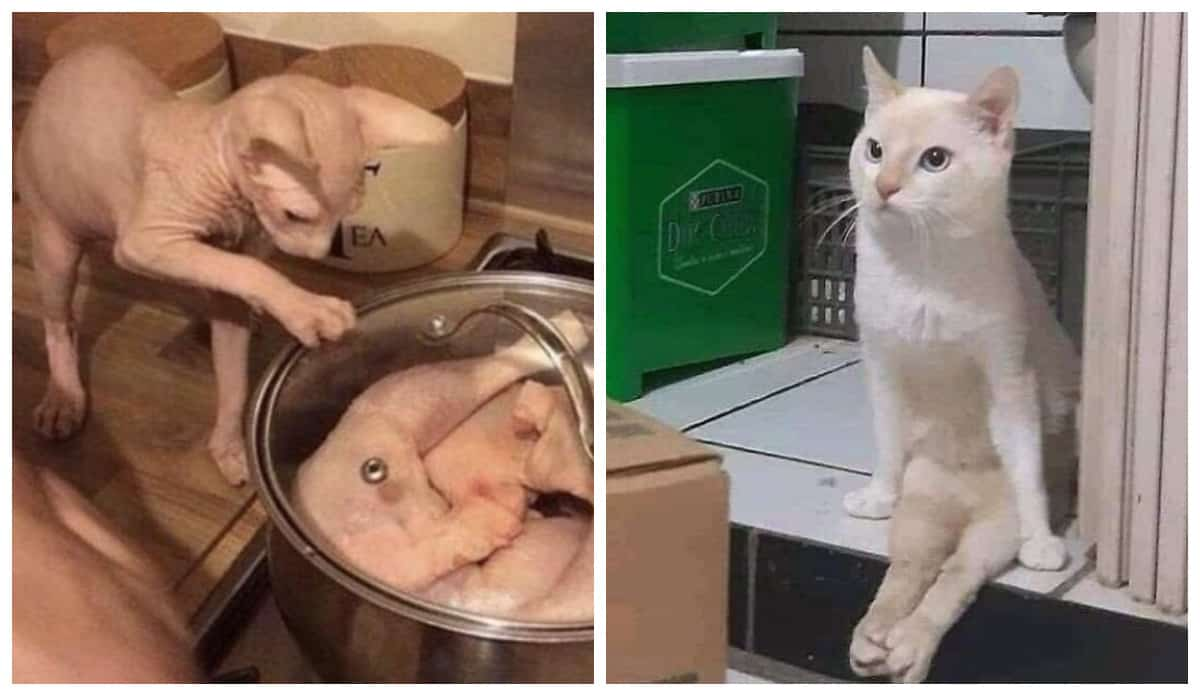 """20 самых смешных фотографий кошек со страницы """"Cat Virus.Exe"""" в Instagram"""