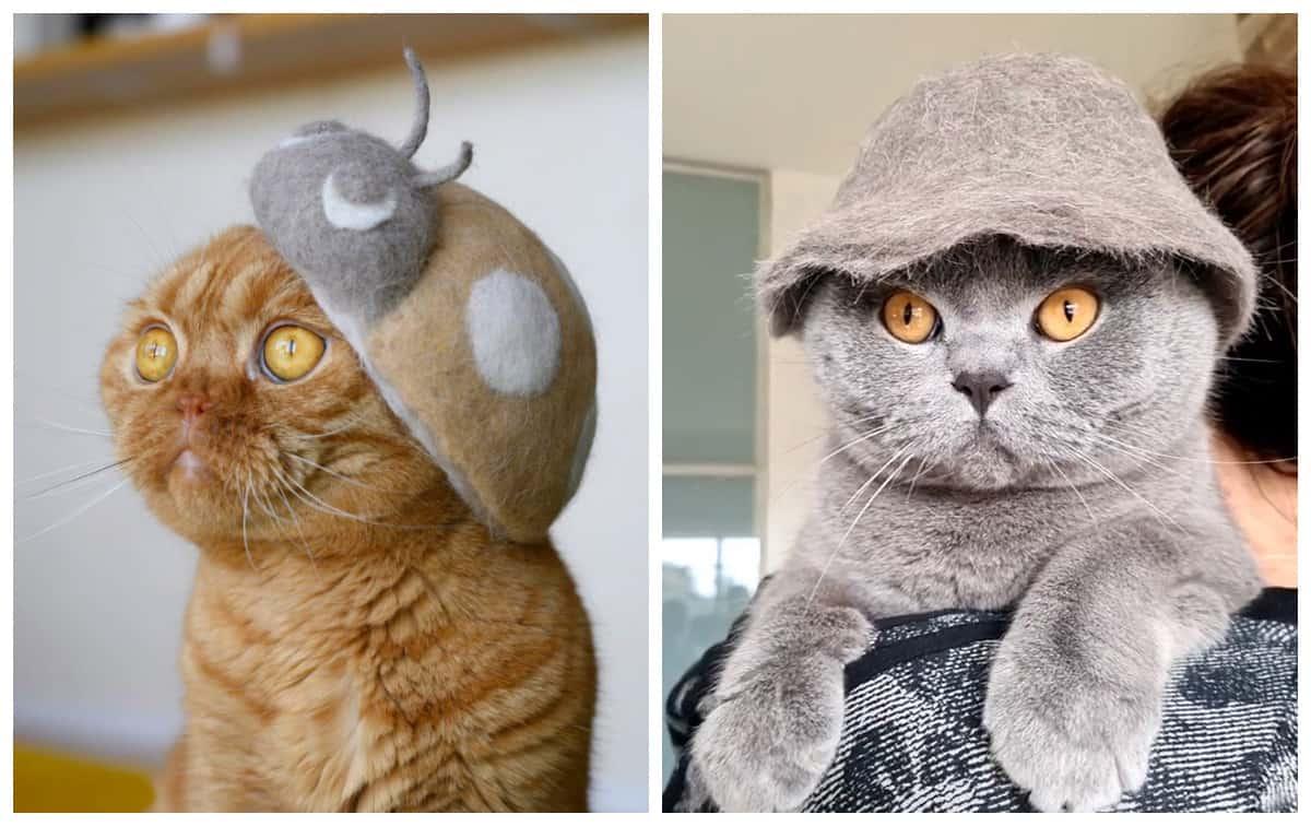 А ты уже смастерил шляпку для своей кошки из ее шерсти?!