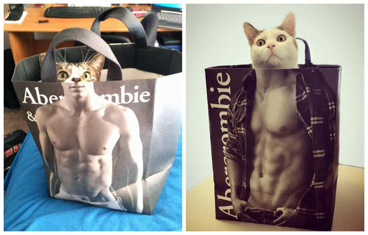 Когда ваш кот тайком качается в спортзале: неотразимые кошки в сумках Abercrombie