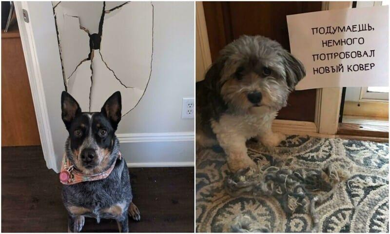 Попались: 20+ виноватых собак, которым ни капли не стыдно за свои преступления