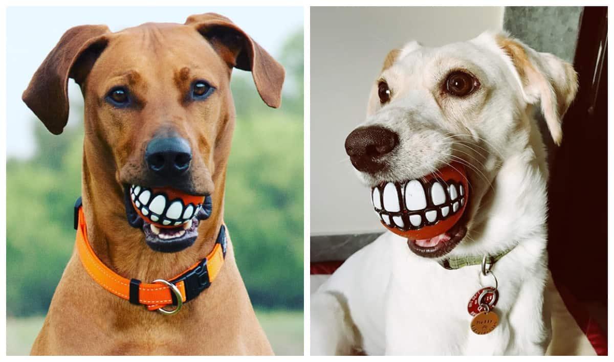 И собаке радость, и соседей напугать!