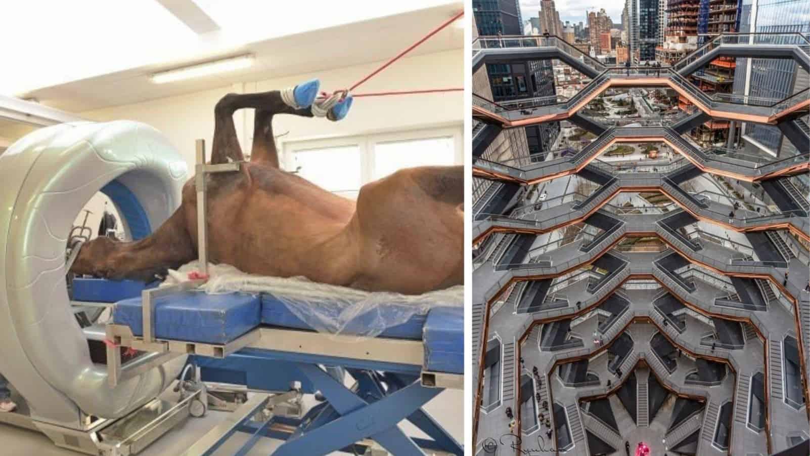 МРТ у лошади, золотые носки и ещё 15 удивительных фотографий разных редкостей