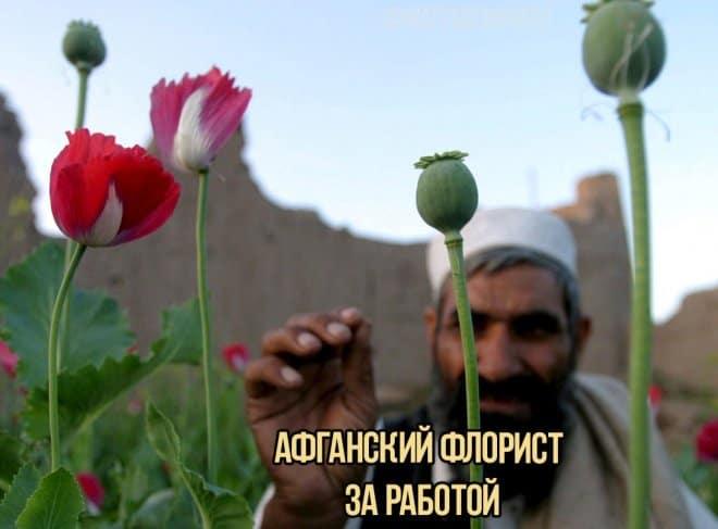 Афганский флорист в нашей подборке прикольных картинок с надписями