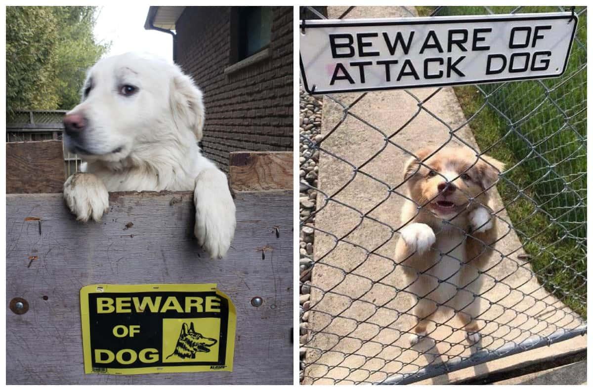 """Монстры за забором с табличкой """"Осторожно, злая собака!"""""""