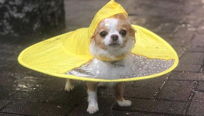 Этот дождевик НЛО - гораздо лучшее решение, чем зонт!