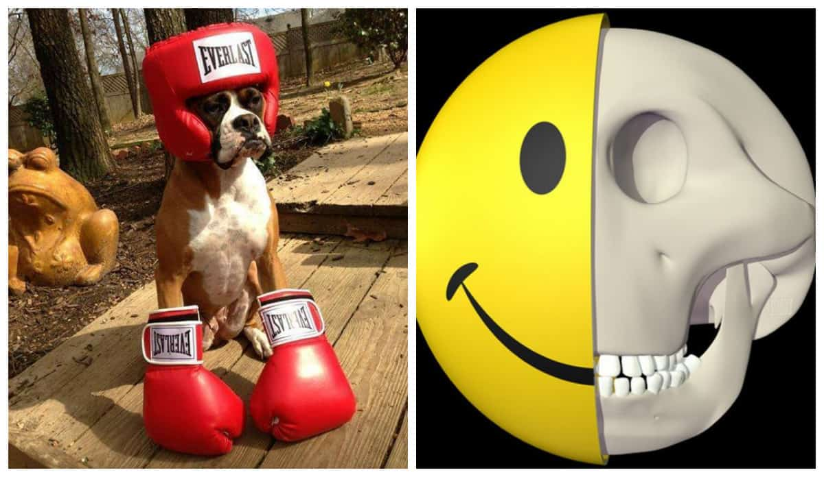 Назвался боксером - полезай на ринг и еще 20+ вторничных фото чисто поржать