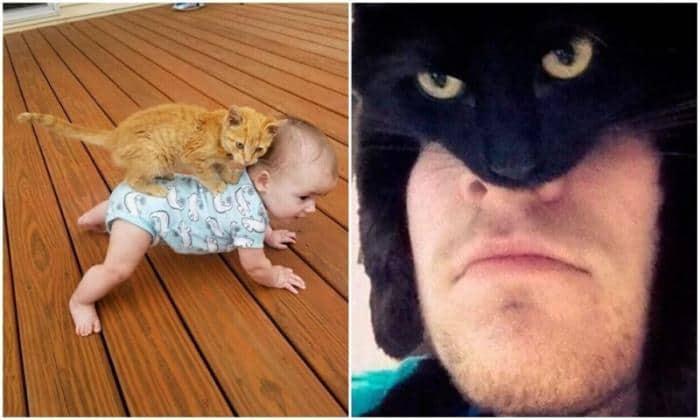 Милота: уморительные фото с котиками для настроения