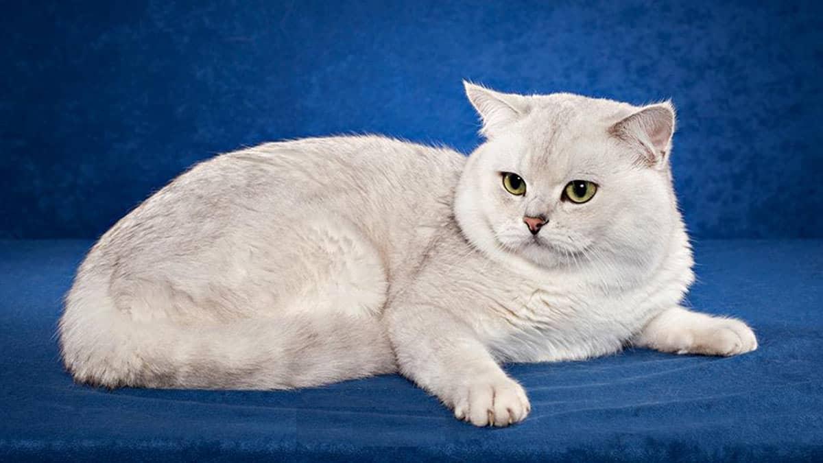 Отличаются умом и сообразительностью: специалисты назвали самые умные породы кошек