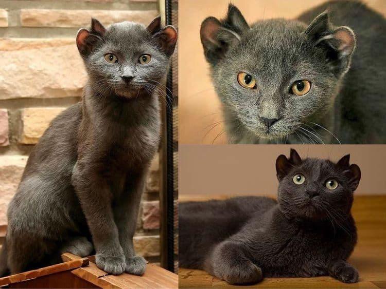 Кот с двумя парами ушей и другие причудливые творения природы