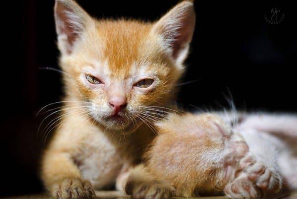 Пушистая сердитость: подборка фотографий злых котиков