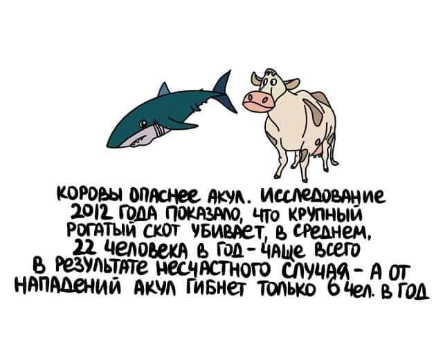 Почему коровы опаснее акул и другие занимательные факты