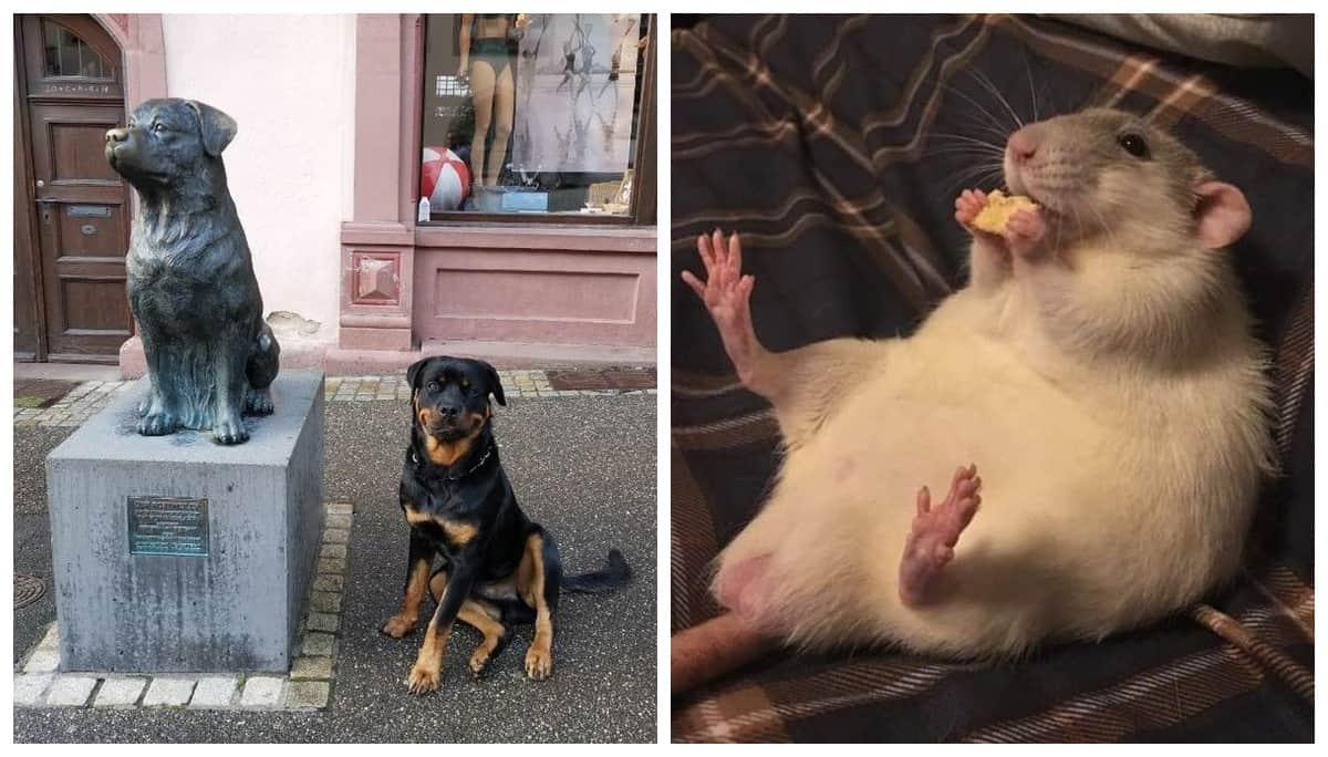 23 фотографии, доказывающие, что домашние животные живут в своем собственном мире